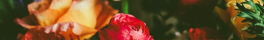 Lilleveed